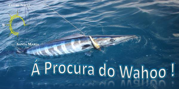 Prova Pesca à procura do wahoo